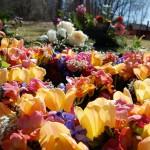 En massa blommor i olika färger
