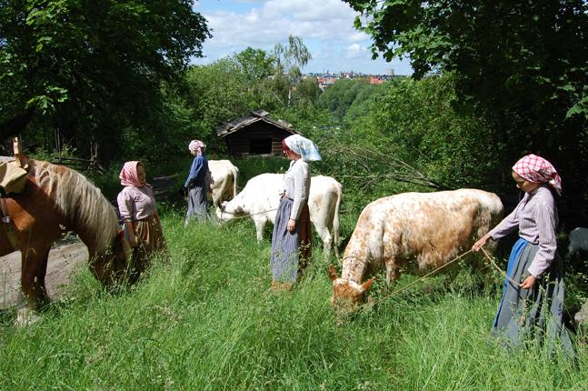 Kullor med häst och kor