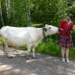 Kon kom fram och slickade mig kärvänligt på handen... :) (Foto: Emma Kullin)
