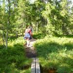 På väg upp till Lybergsgnupen genom skog och över myr. (Foto: Emma Kullin)