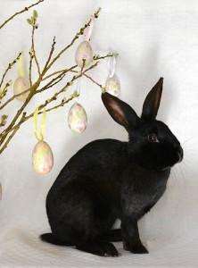 Svart kanin sitter vid påskris.